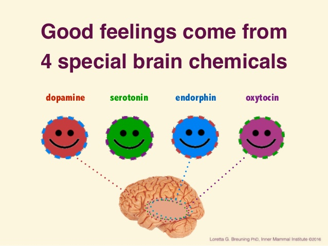 happy-brain-chemicals-dopamine-serotonin-oxytocin-and-endorphin-2-638